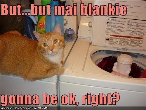 blanket caption laundry scared washing machine - 3820491264