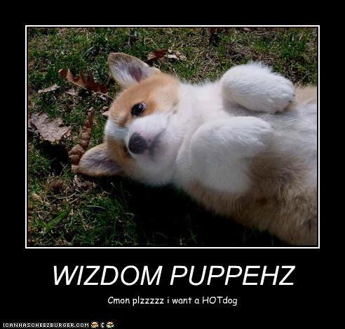 WIZDOM PUPPEHZ Cmon plzzzzz i want a HOTdog