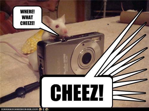 Cheezburger Image 3820758784