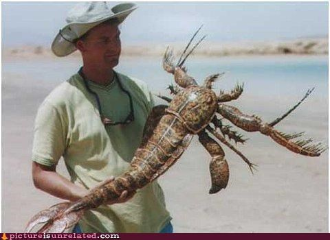 alien animal-non-human lobster nature wtf