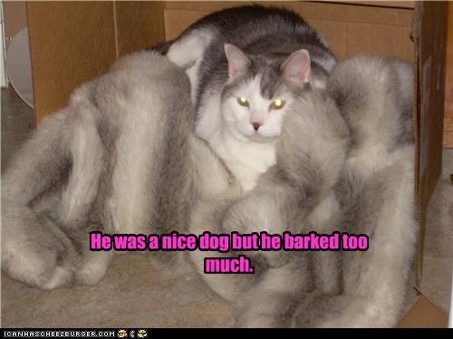 bark barking caption captioned cat coat evil fur nice remembering too much - 3821471488