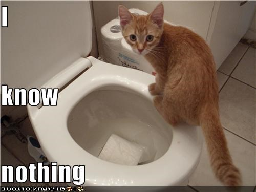bad cat bathroom caption innocent toilet toilet paper - 3821773824