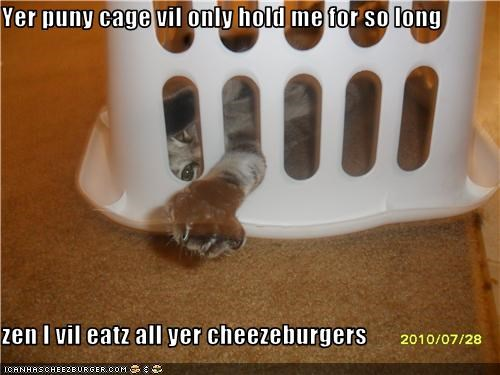 Cheezburger Image 3822217472