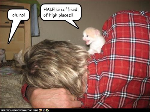 oh, no! HALP! ai iz 'fraid of high placez!!