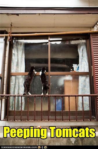 caption,peeping,window