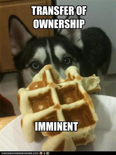 Hall of Fame hungry husky noms ownership transfer waffle - 3824211712