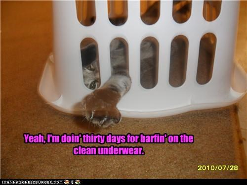 30,barfing,basket,caption,captioned,cat,days,doing time,jail,laundry,locked up,prison,punishment,sentence,underwear