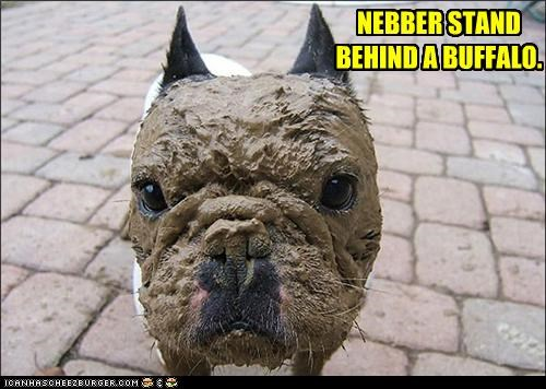 buffalo bulldog consequences mud never poop Sad - 3824720896