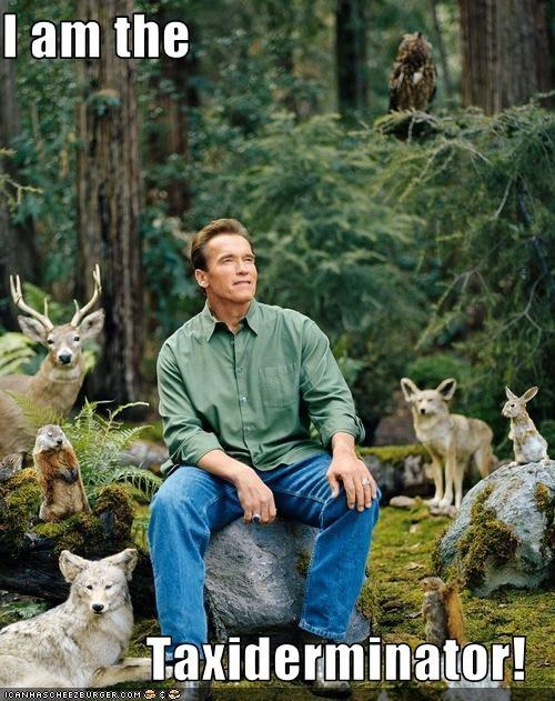Arnold Schwarzenegger funny lolz - 3825073664