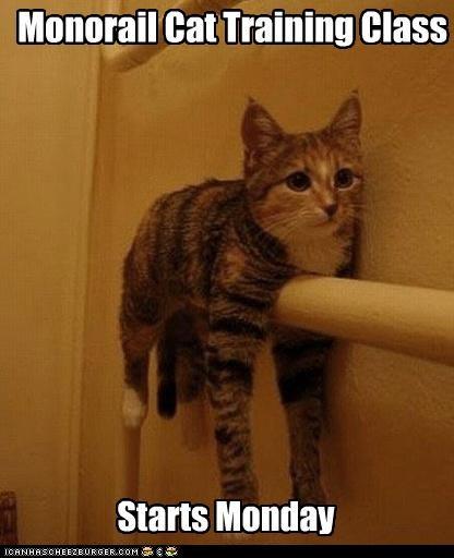 Monorail Cat Training Class Starts Monday
