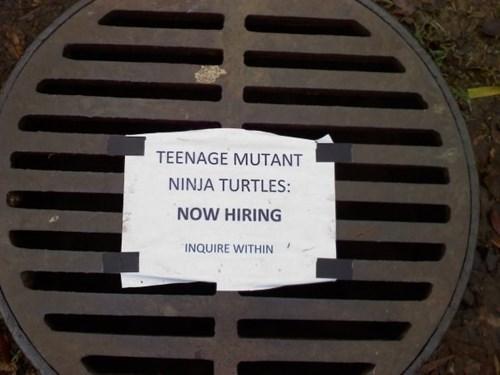 hiring job opening ninja turtles pizza win - 3825924352