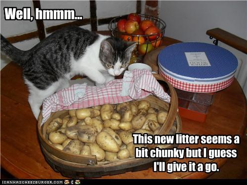 This new litter seems a bit chunky but I guess I'll give it a go. Well, hmmm...