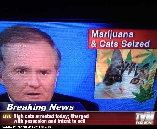 Breaking News - High cats arrested today; Charged with possesion and intent to sell