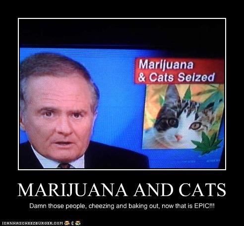 MARIJUANA AND CATS Damn those people, cheezing and baking out, now that is EPIC!!!