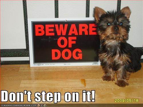 beware of dog,cute,irony,mixed breed,squish,terrier