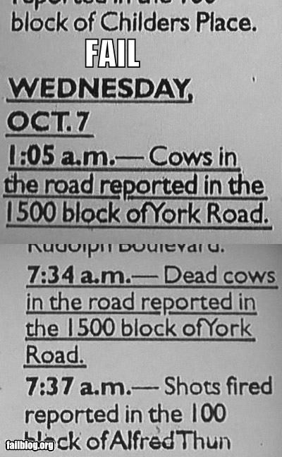 bovine troubles,cows,failboat,news,police,road blocked,road kill