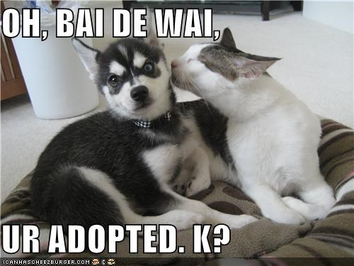 adopted,Hall of Fame,husky,kitteh,puppy,surprised