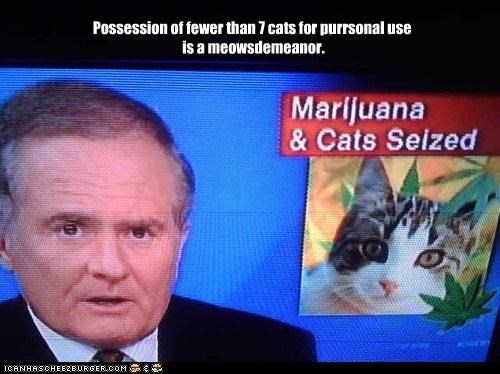animals Cats drugs lolcats marijuana news puns wtf - 3829153792