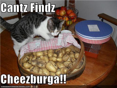 Cheezburger Image 3829687040