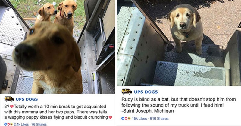 ups dog-spotting group is awesome