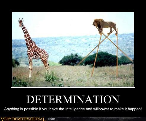 animals giraffes Hall of Fame jk lion not shopped stilts Terrifying - 3830807552