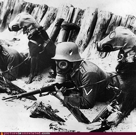 dogs,gas masks,trenches,war,wtf