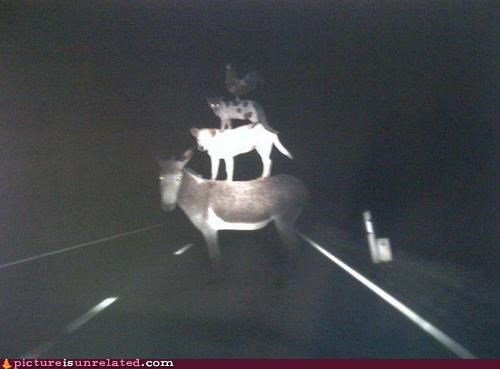 animals driving hallucinogenics road scary wtf - 3831781120