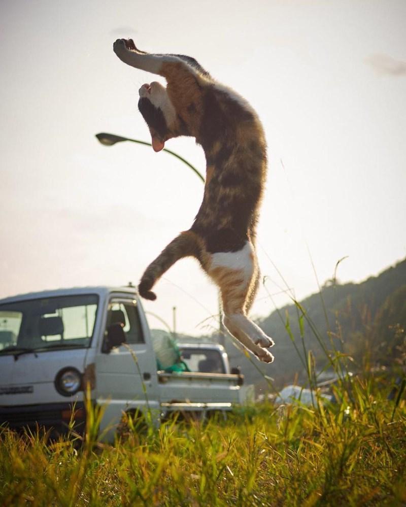 photos of ninja cats