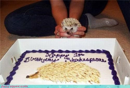 birthday hedgehog noms