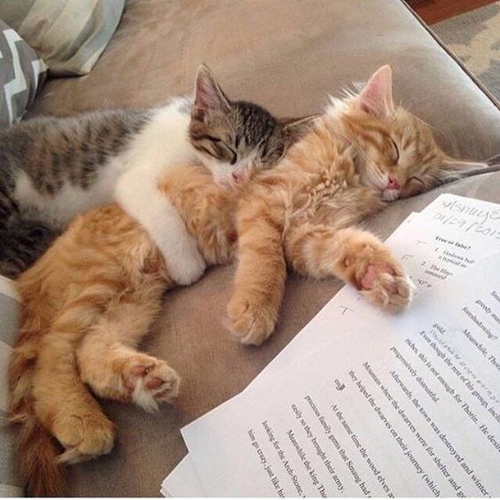 cats that snuggle