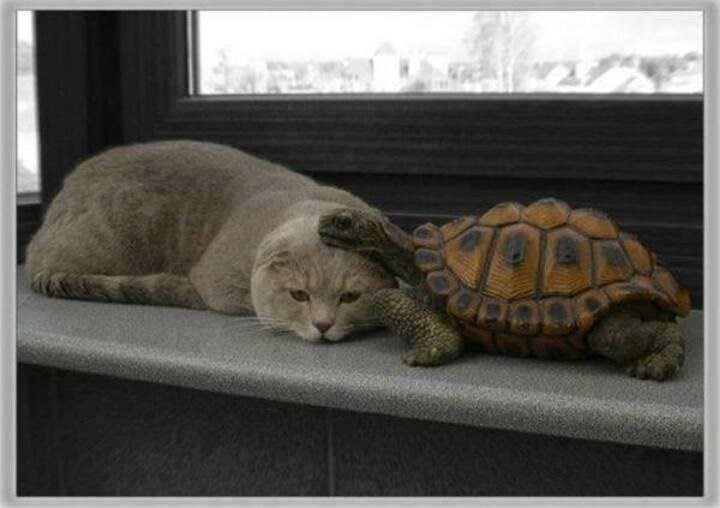 a cute photo album of turtles and cats and kittens