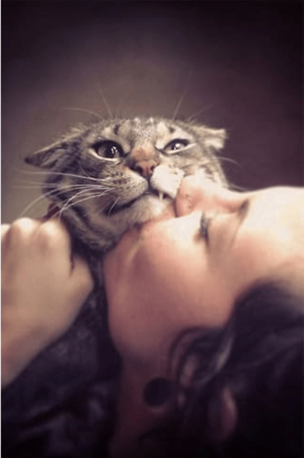 a cat that isn't very happy about getting kisses