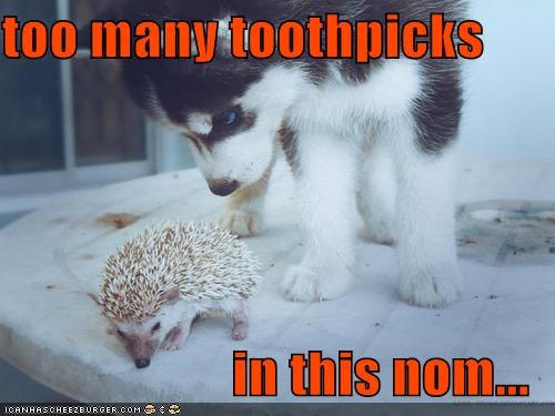 cute Hall of Fame hedgehogs husky noms not edible puppy toothpicks - 3834171136