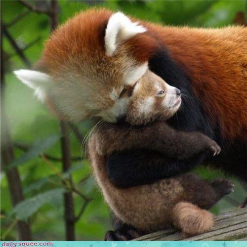 baby mama red panda - 3834686976