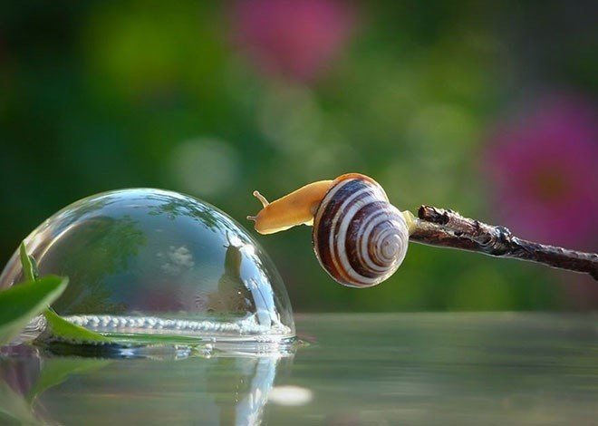 secret life of snails
