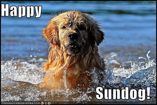golden retriever happy sundog smiling swimming wet - 3835144704