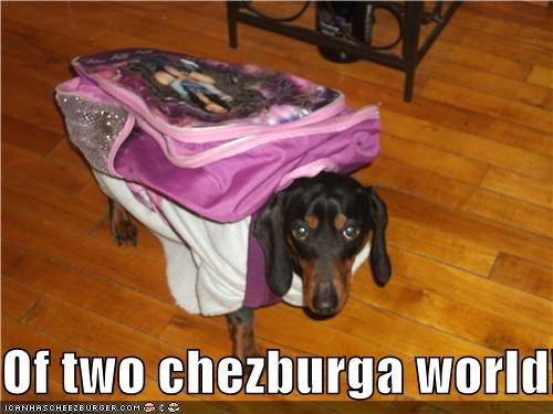 Cheezburger Image 3835341056