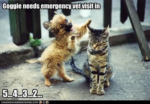 Goggie needs emergency vet visit in 5...4...3...2...