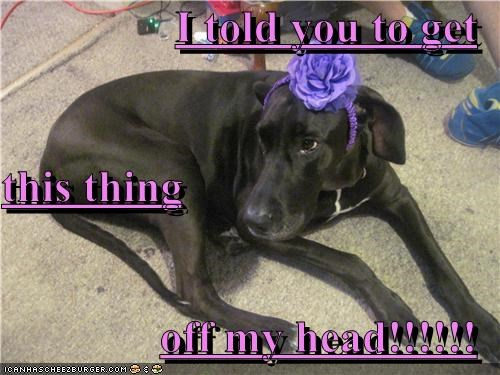 I told you to get this thing off my head!!!!!!