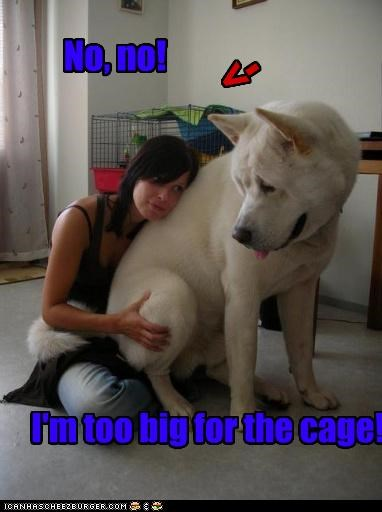 No, no! I'm too big for the cage! <-