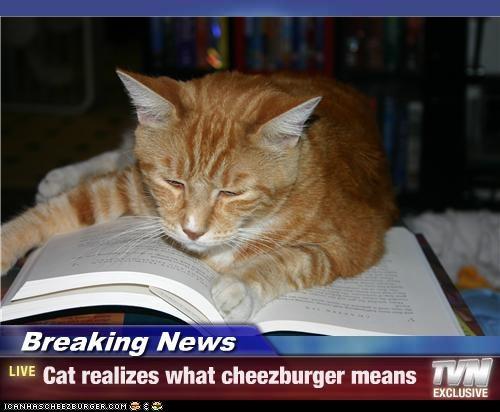 Cheezburger Image 3837516288