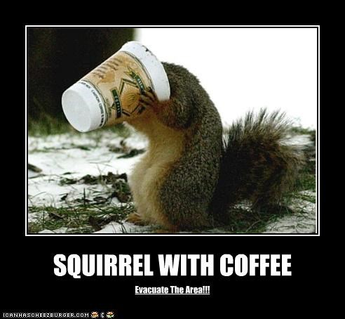 SQUIRREL WITH COFFEE Evacuate The Area!!!