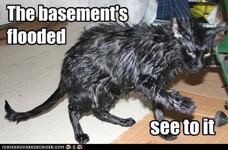The basement's flooded see to it