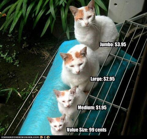 caption,choice,different sizes,four,kitten,prices