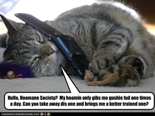 caption,cat,Cats,cell phone,humane society,replacement hoomin,wet food