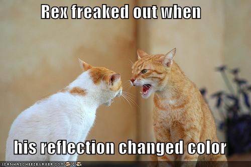 caption cat color change reflection tabby - 3842196480
