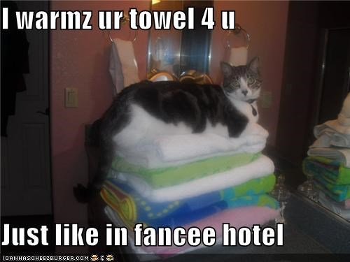 cyoot kitteh of teh day,hotel,towels,warm
