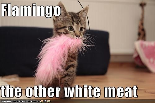 caption feather flamingo kitten other white meat
