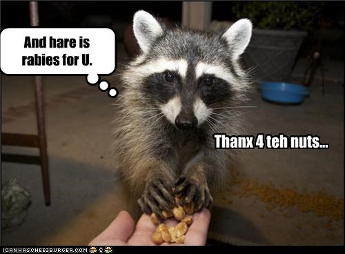And hare is rabies for U. Thanx 4 teh nuts...