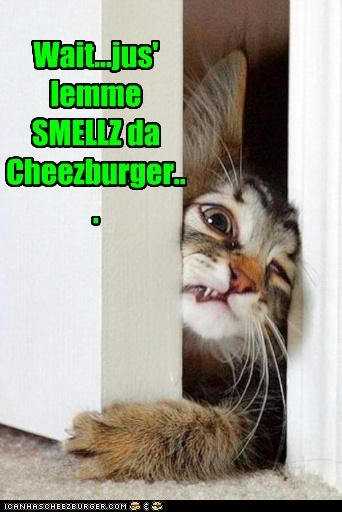 begging,caption,captioned,cat,cheeseburger,closing,do want,door,frustrated,smell,squeezing,upset,wait